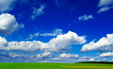Clear Sky and greenery